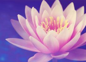 Quand bouddhistes et protestants parlent de méditation et de prière, le 23 octobre 2018.